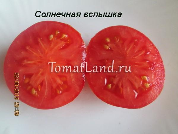 томат сорт Солнечная вспышка отзывы