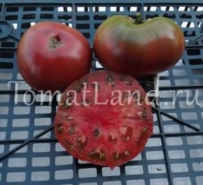 томат Апетитный отзывы