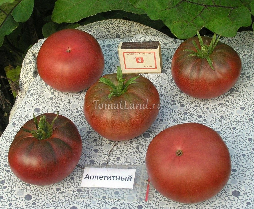 помидор аппетитный фото