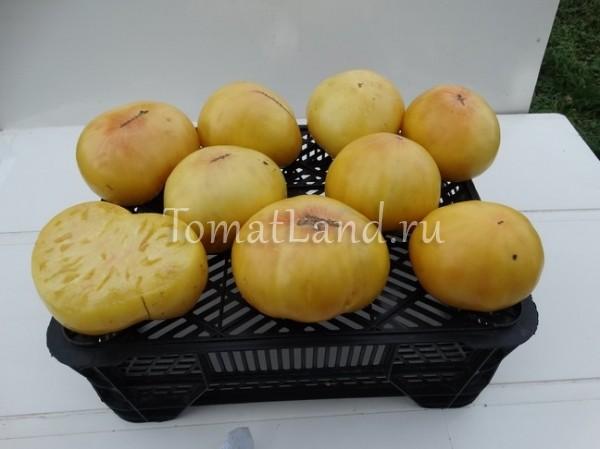 помидор Белая королева фото спелых плодов