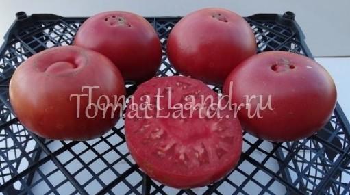 помидоры Бийский розан фото спелых плодов