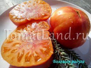 томат большая радуга фото характеристика