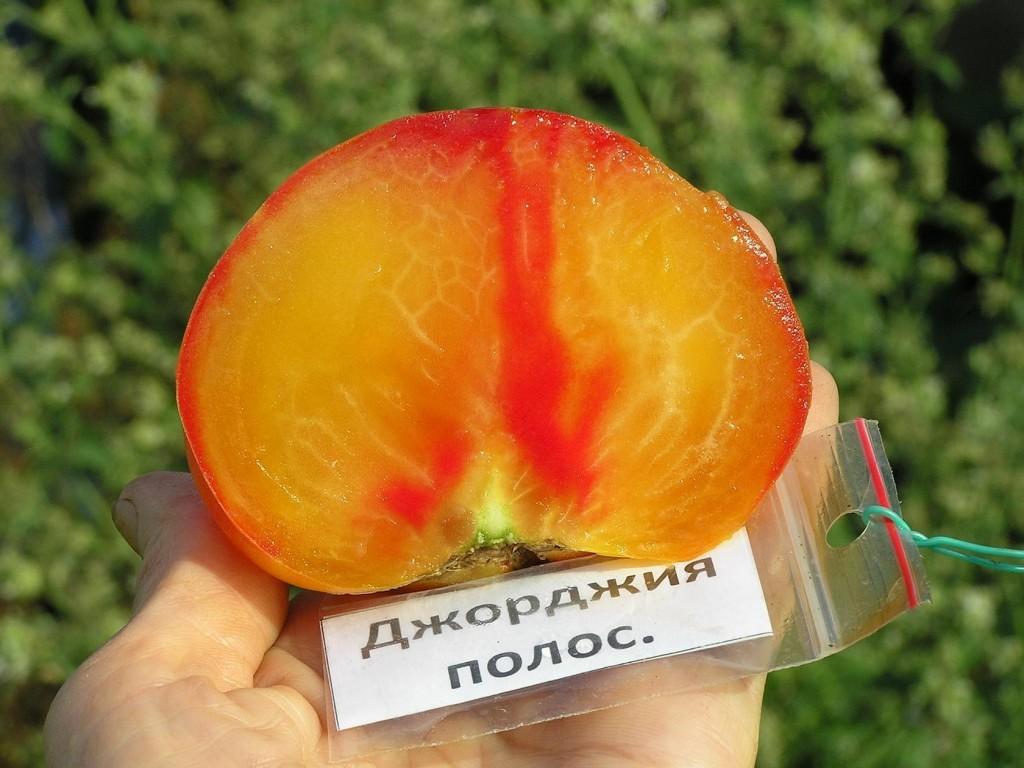 помидоры джорджия полосатая фото в разрезе