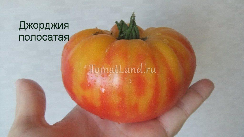 томат Джорджия полосатый фото спелых плодов