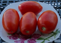 помидоры сорт Фэмили