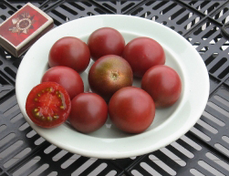 помидоры Казачка сорт