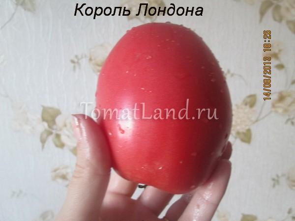 помидоры король лондона
