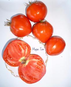 томаты крупная гроздь фото спелых плодов