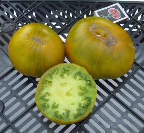 сорт мексиканский зеленый