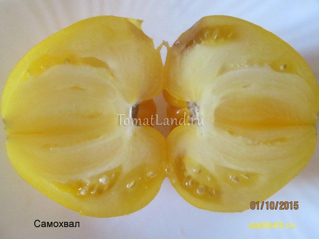 помидоры Самохвал фото плодов в разрезе