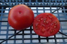помидоры Северное сияние