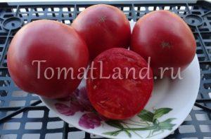 помидоры Сибирское яблоко