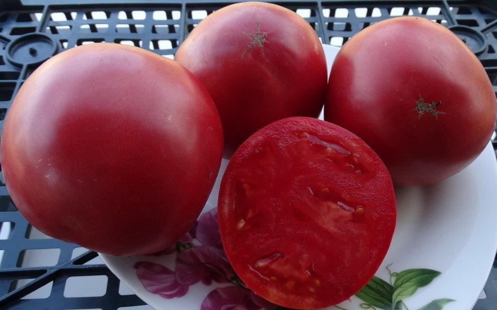 помидоры сибирское яблоко отзывы фото характеристика