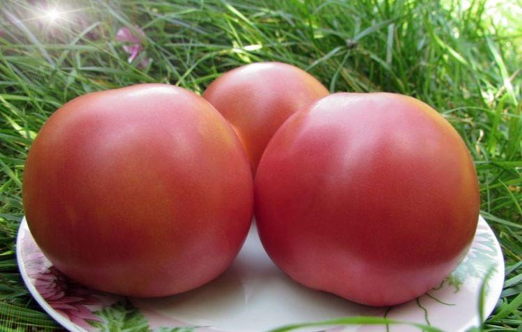 помидоры сибирское яблоко фото