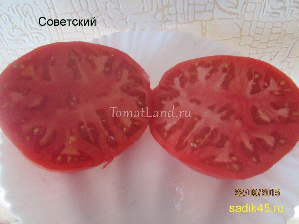 помидоры Советский отзывы