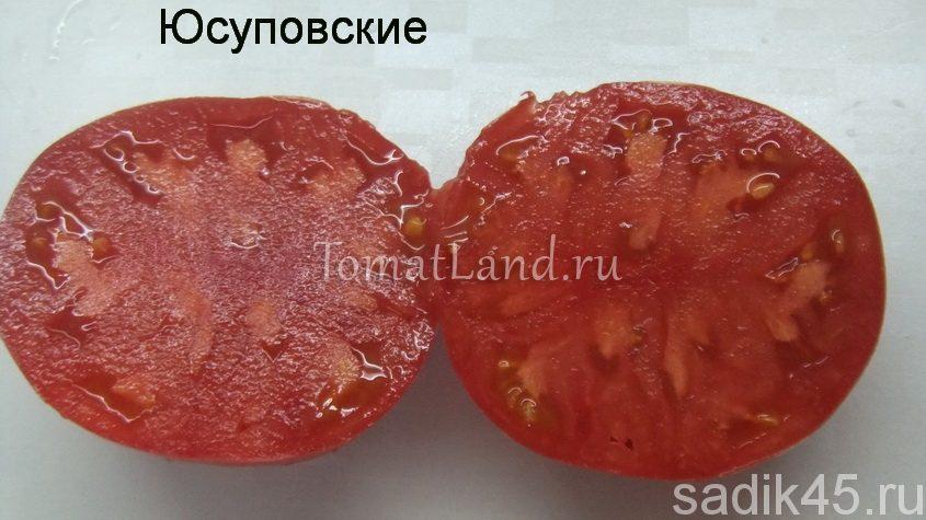 помидоры юсуповские фото