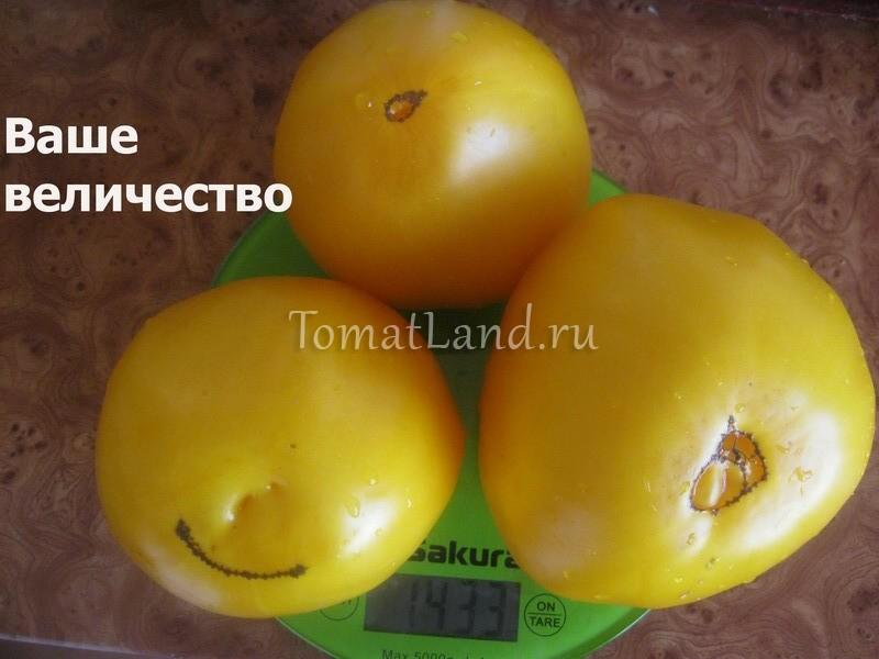 помидоры Ваше величество фото отзывы