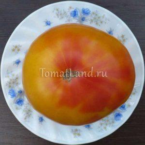 помидоры вирджинии сладости фото