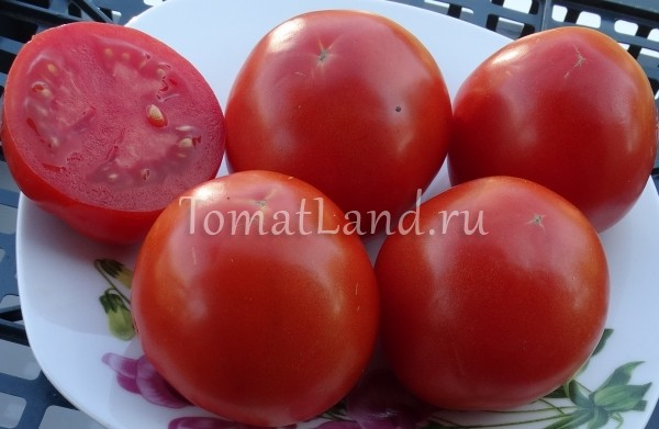 помидоры царица севера фото в разрезе