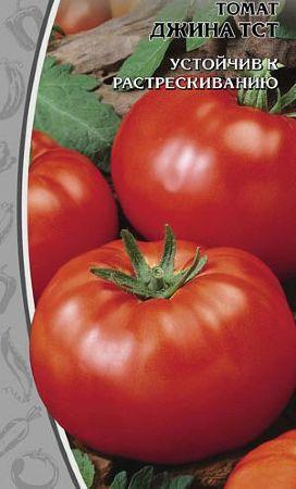 Сорт прибывший к нам из Голландии — томат Джина: описание помидоров и особенности их выращивания