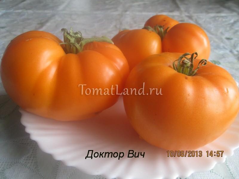 помидоры Доктор Вич фото спелых плодов