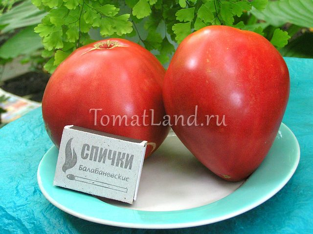 помидоры Фатима фото спелых плодов отзывы характеристика