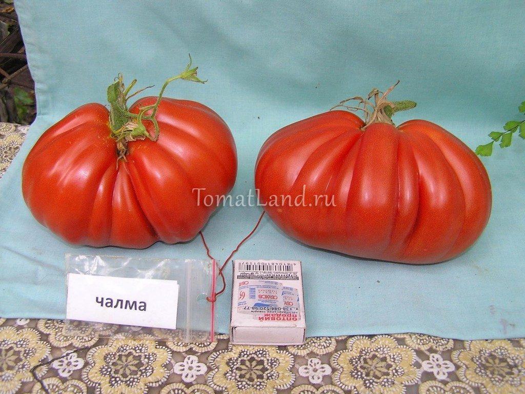 помидоры чалма фото