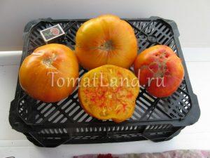 помидоры сорт Мятные