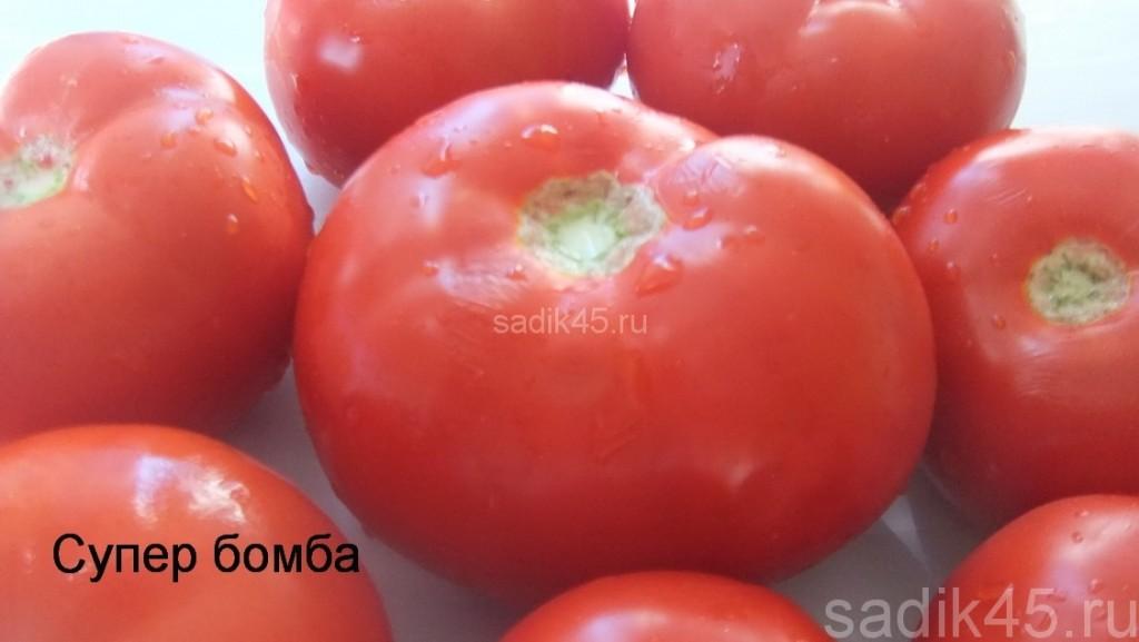 помидоры супер бомба фото