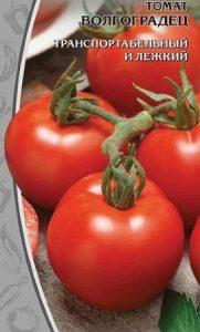 помидоры сорт Волгоградец
