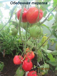 помидоры обеденная тарелка