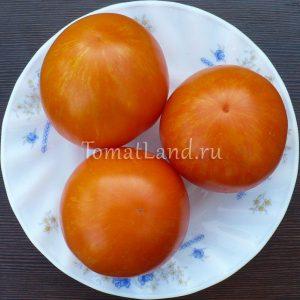 томат сладкий солано
