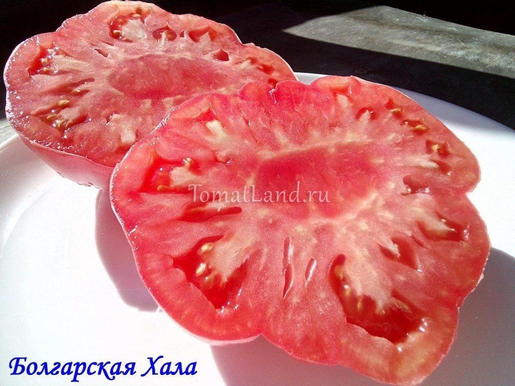 томат болгарская хала фото в разрезе