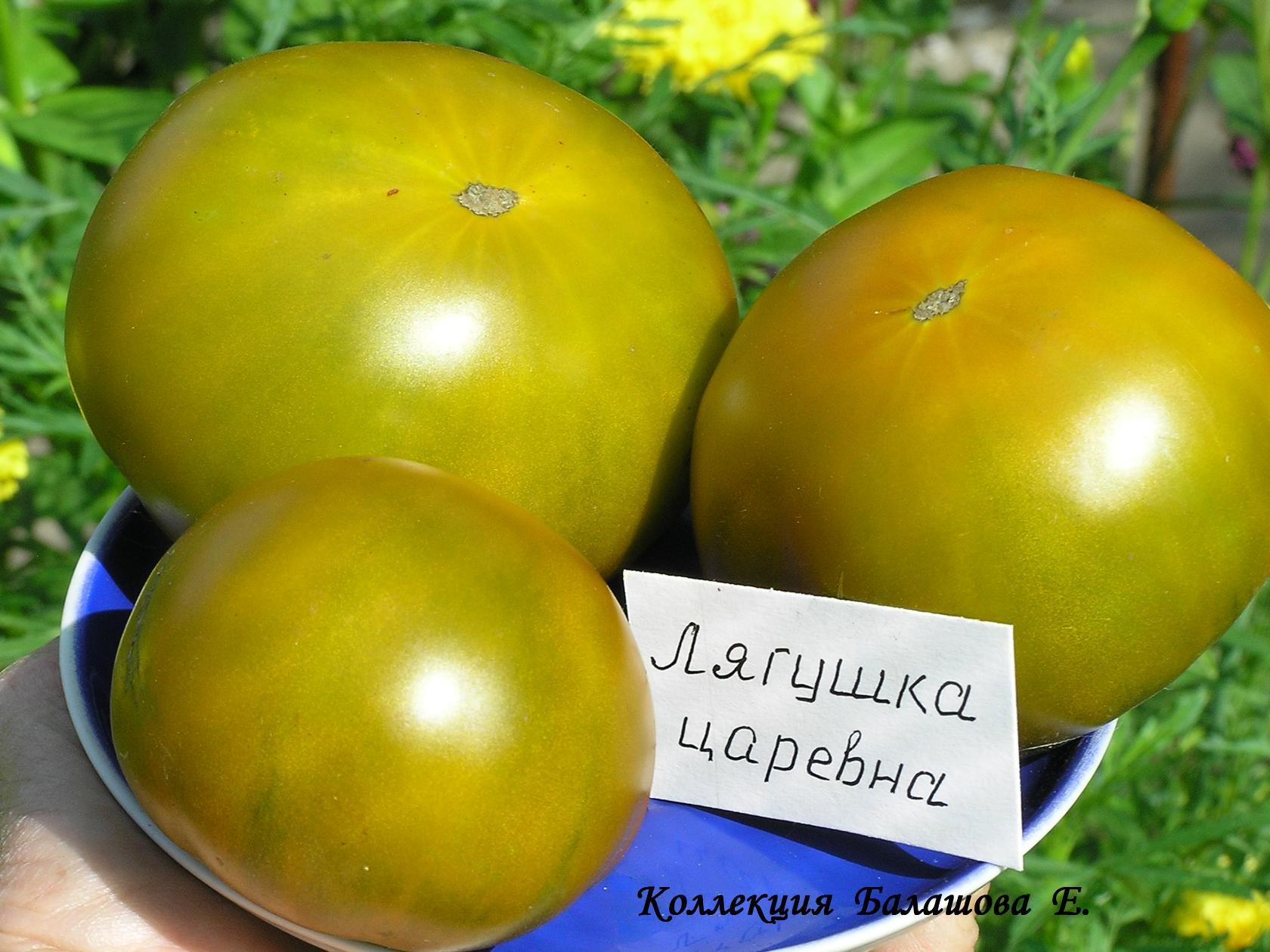 помидор лягушка царевна на фото отзывы