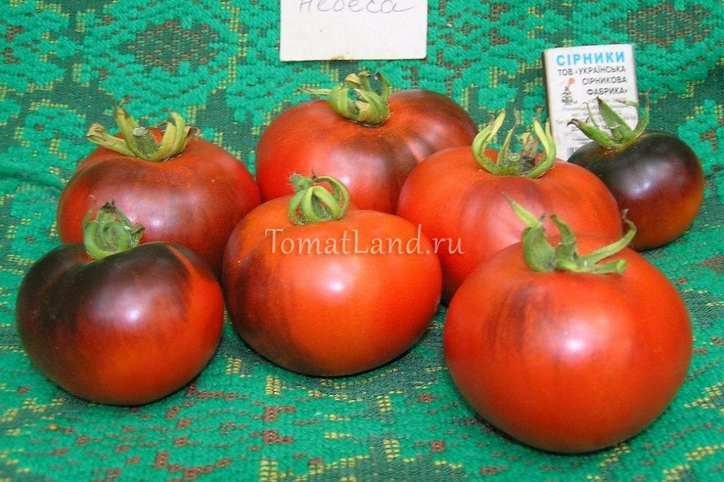 томаты синие небеса фото