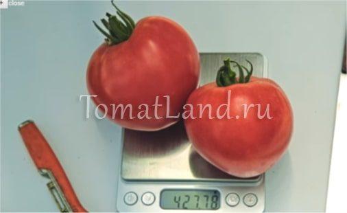 томаты розовый спам фото на весах