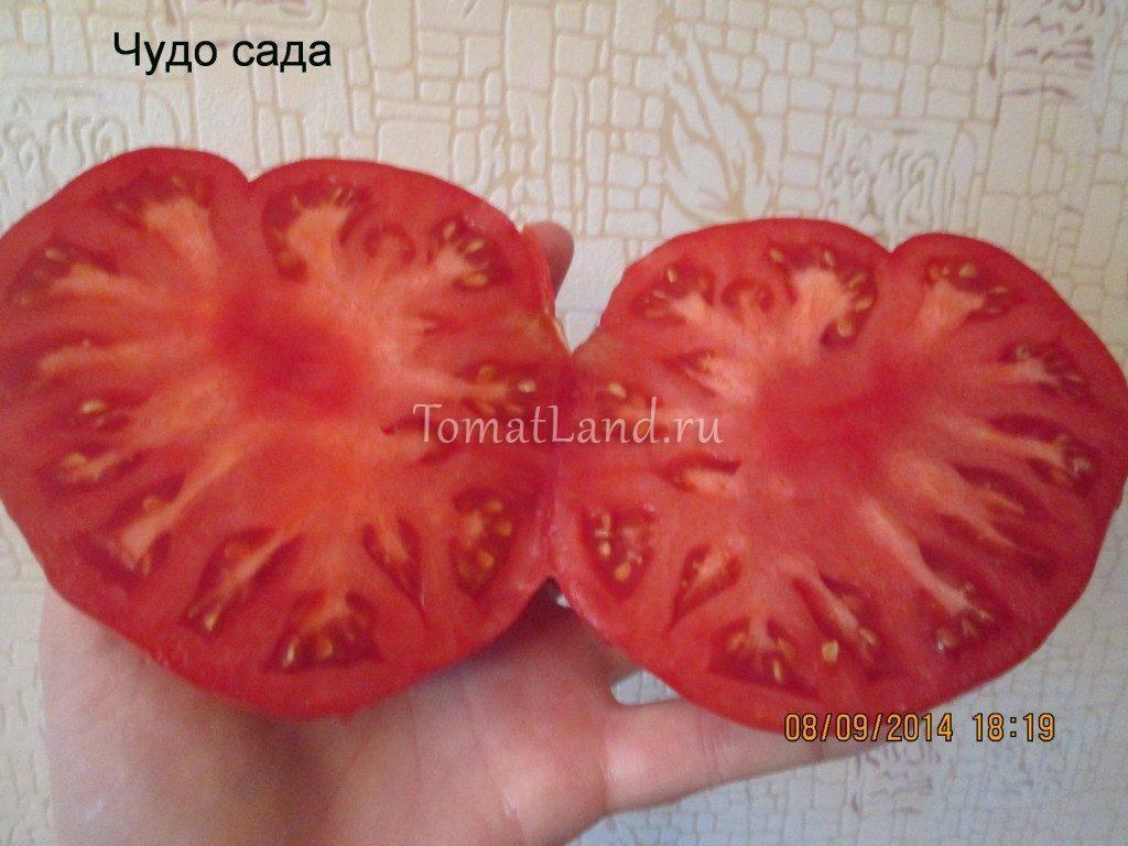 помидоры чудо сада фото в разрезе