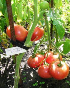 томат каспийский розовый фото