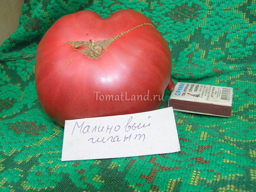 помидоры Малиновый гигант фото спелых плодов