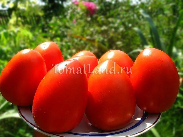 сорт Огородный колдун фото спелых плодов