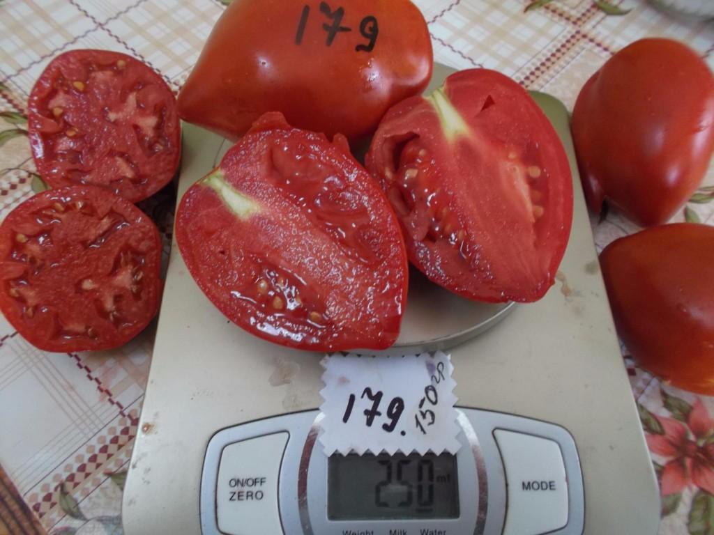 томаты ракета фото на весах и в разрезе