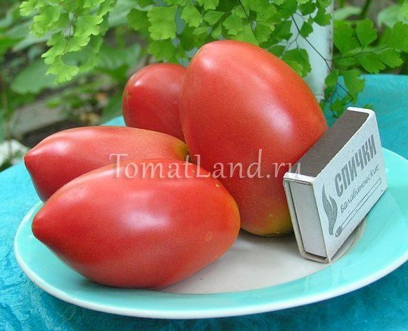 помидоры Розовая стелла фото