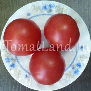 томат роза ветров