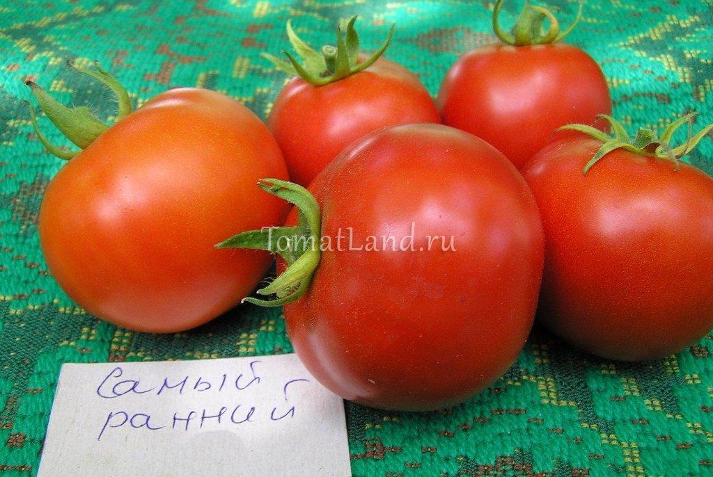 помидоры самые ранние фото