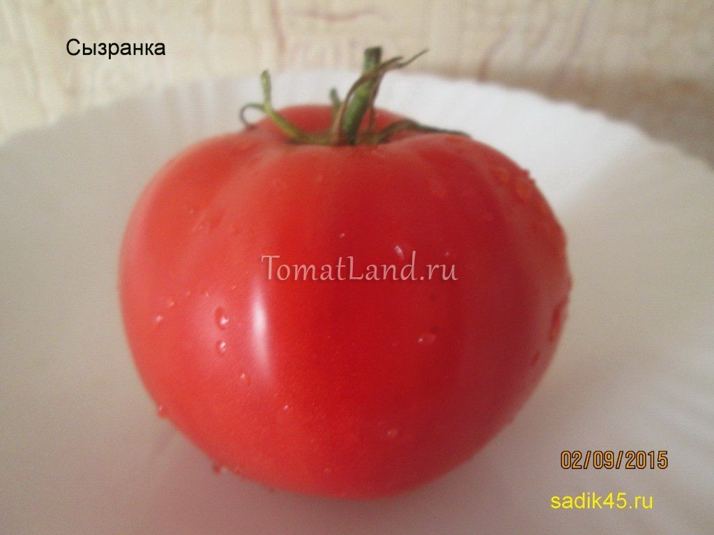 помидоры сызранка фото спелых плодов