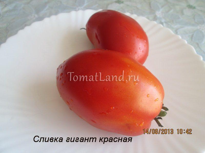 помидоры сливка гигант красная