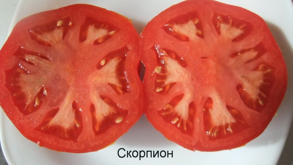 томат скорпион фото в разрезе