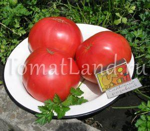 томат славский розовый