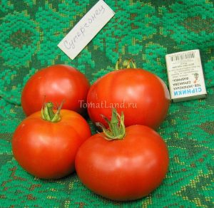 томат супергонец