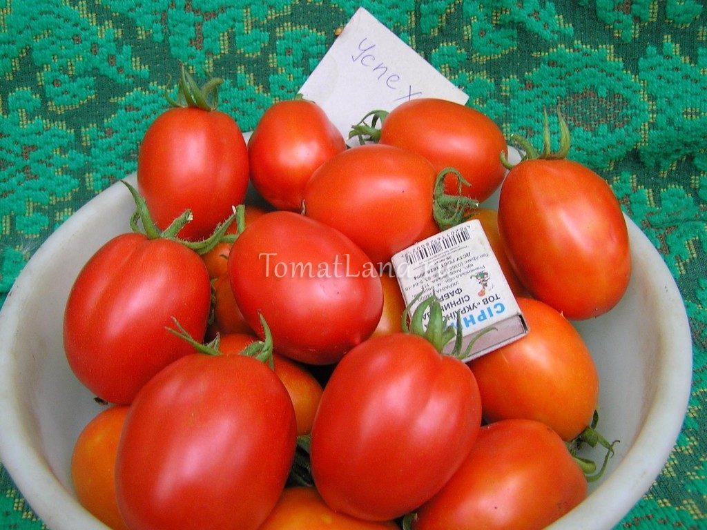 помидоры успех фото спелых плодов отзывы